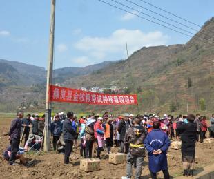 彝良县农业农村局大力发展牧草养畜产业 助民增收奔小康